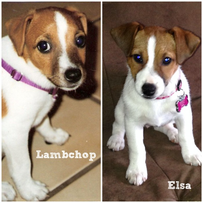 Lambchop on the left, Elsa on the right.
